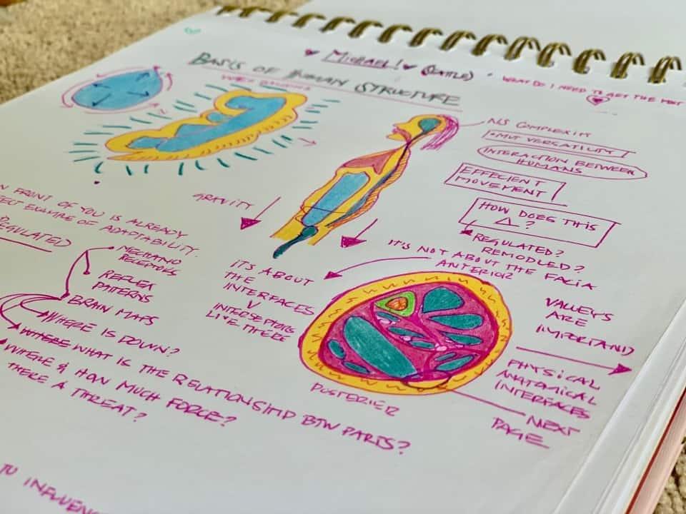 anatomy notes